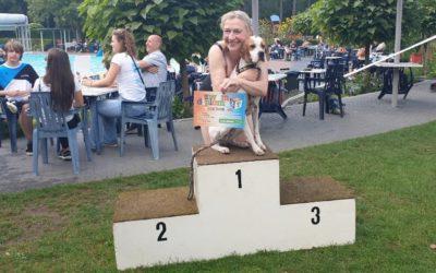 Honden gaan voor hun zwemdiploma